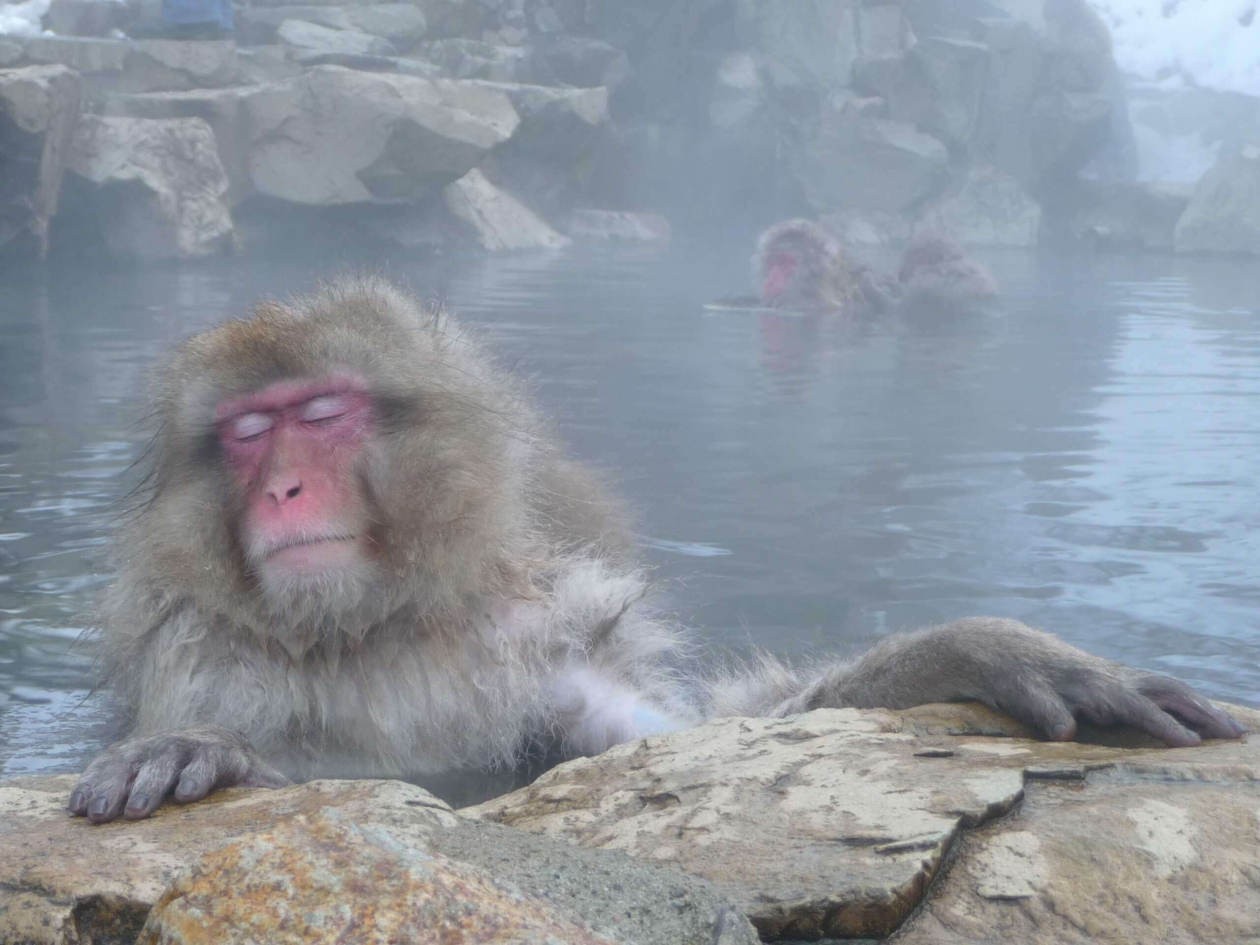 A monkey relaxes in a hot spring in Japan